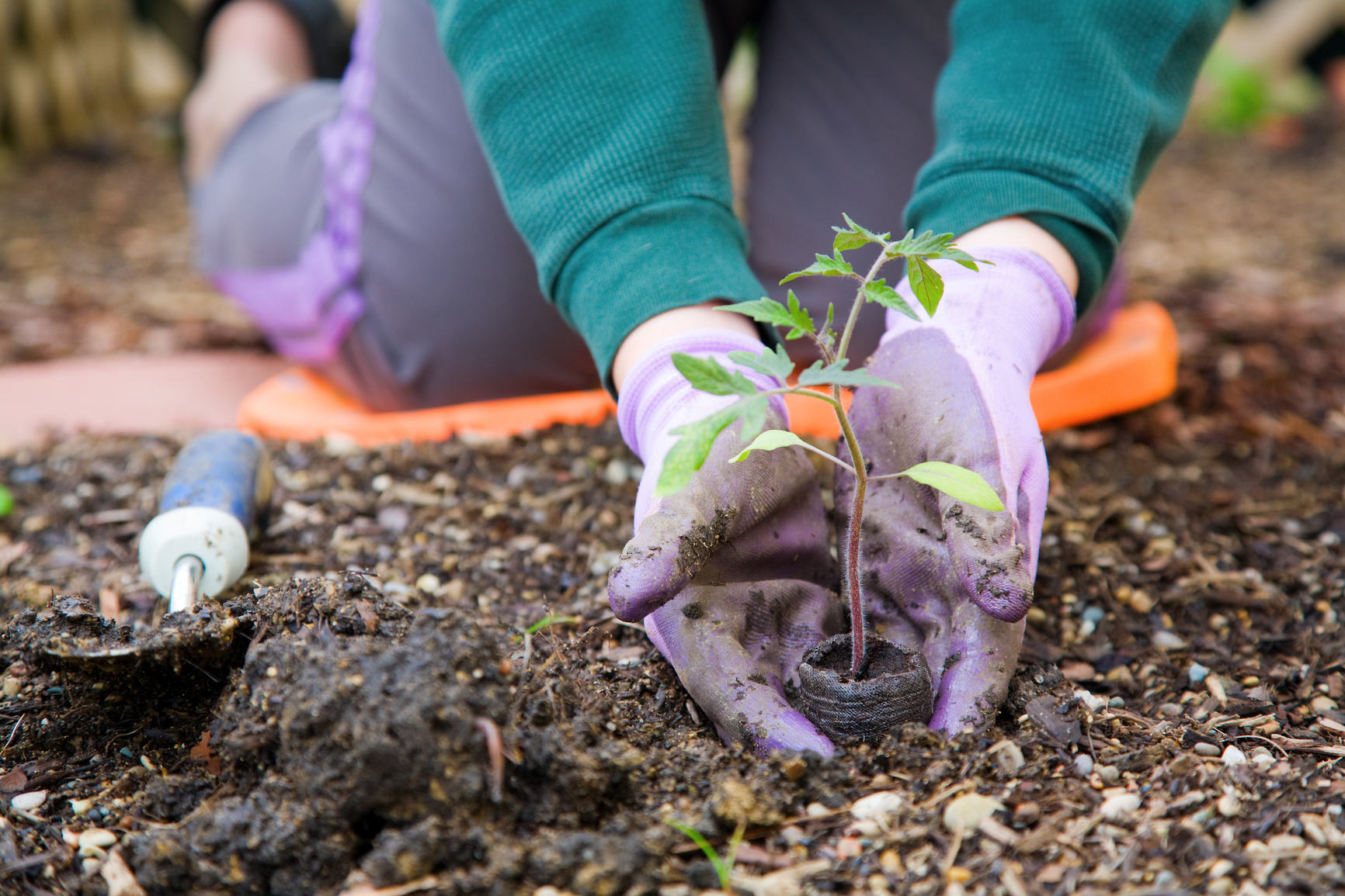 Starting From Scratch Gardening 101 Snappy S Outdoor Equipment