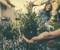 Benefits of Yard Work