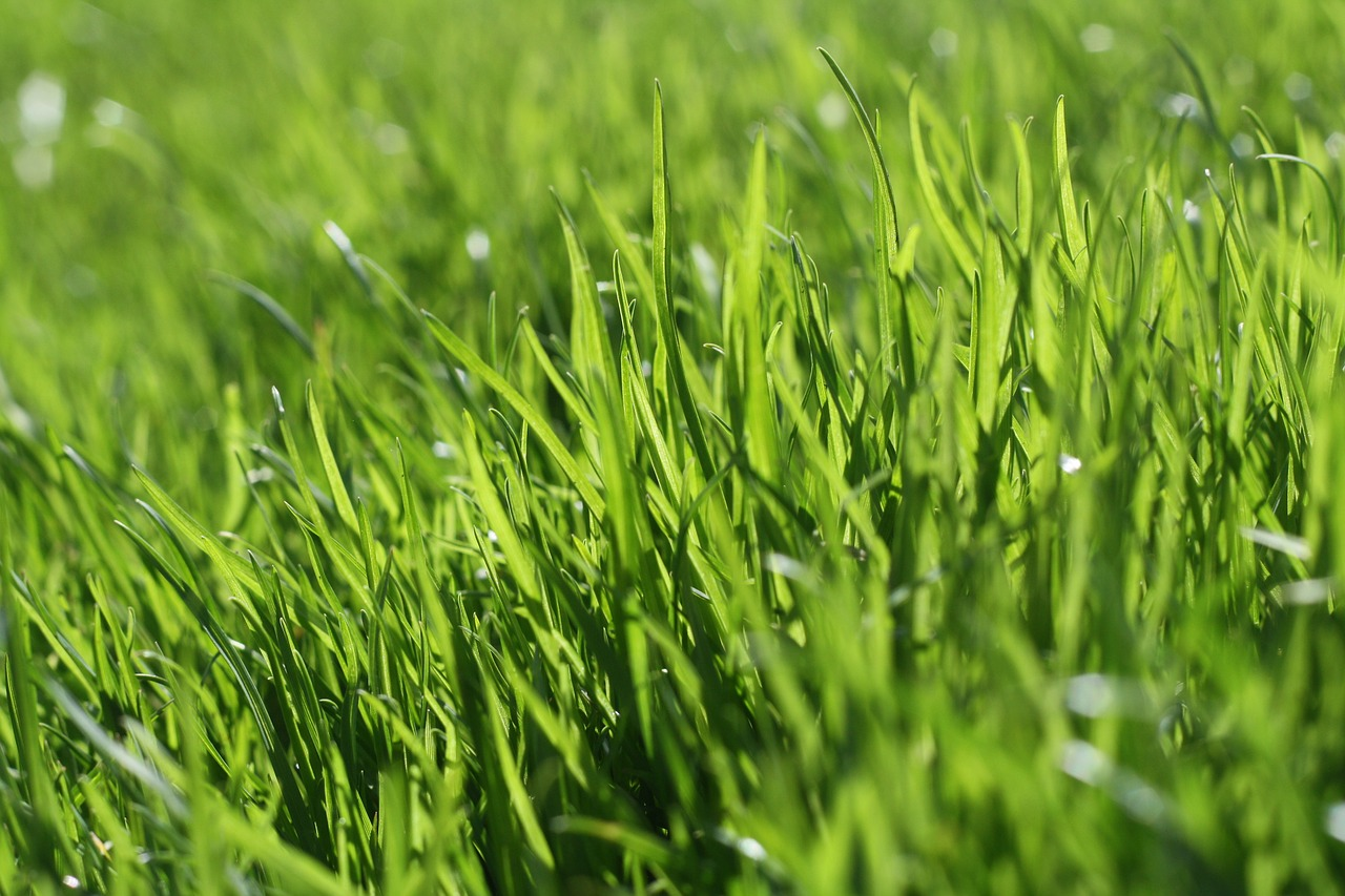 Rolling Your Yard Should You Or Shouldn T You Snappy S