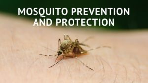 Mosquito Prevention and Protection