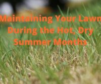 Maintaining Your Lawn During Hot, Dry Months