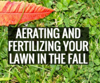 Aerating and fertilizing your lawn in the fall