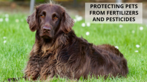 Protecting Pets From Fertilizers and Pesticides