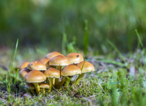 What to do about mushrooms on your lawn